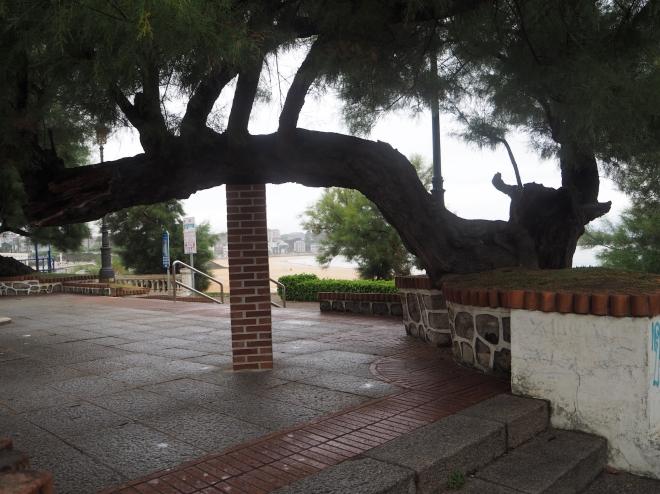 tree held up by bricks Santander 716.JPG