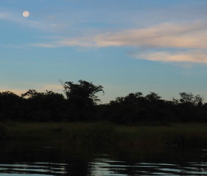 moon trees boat trip Lake Ihema Akagera National Park 417 2.JPG