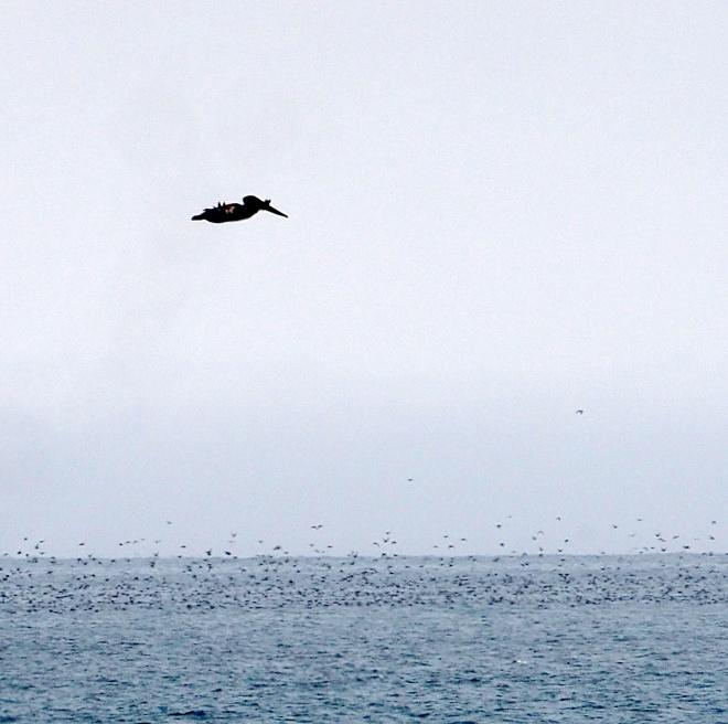 pelican Aptos 818 102.JPG