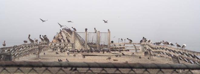 pelicans pier concrete boat Aptos 818 2.JPG