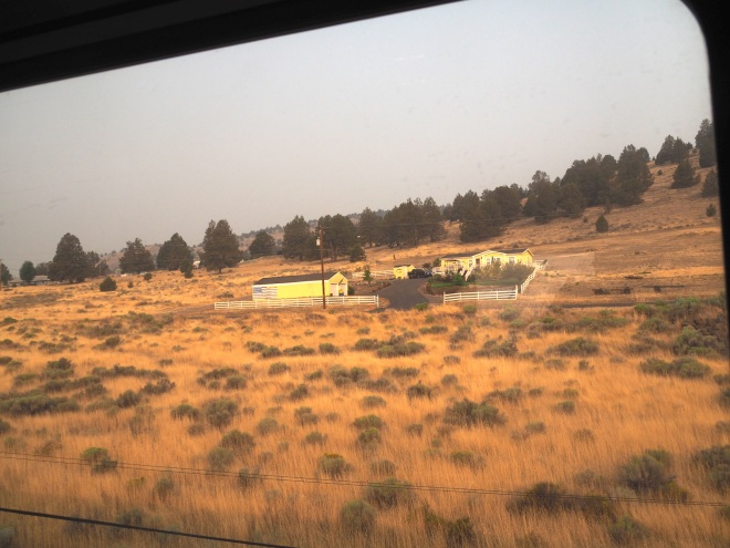 yellow farm just into Oregon train Emeryville-Seattle 818.JPG