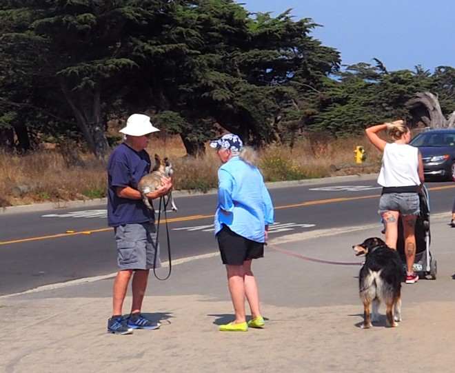 cyclist carrying surfboard man carrying dog Santa Cruz 818.JPG