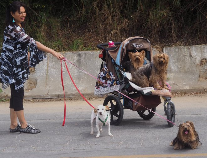 dogs pushchair Aptos 818.JPG