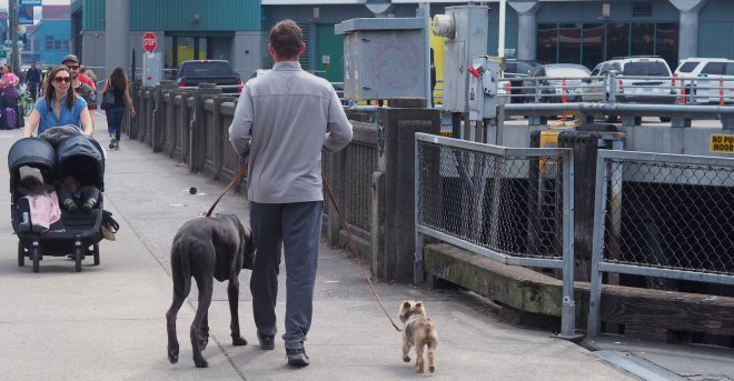man dogs Seattle 818.JPG