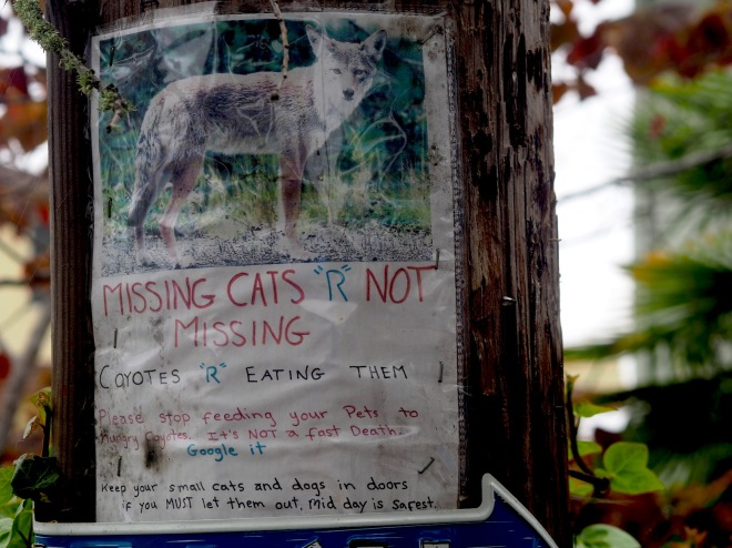public writing MISSING CATS R NOT MISSING COYOTES R EATING THEM and dogs Aptos 818.JPG