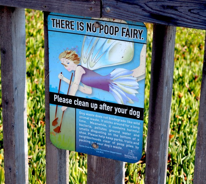 public writing THERE IS NO POOP FAIRY public fairy dog Santa Cruz 818.JPG