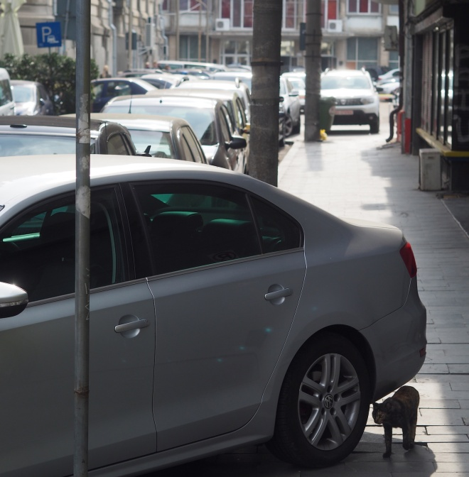cat badly parked cars Bucharest 1018.JPG