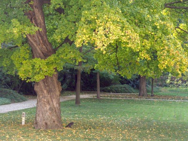garden Auersberg Palais Vienna 1018 trees.JPG