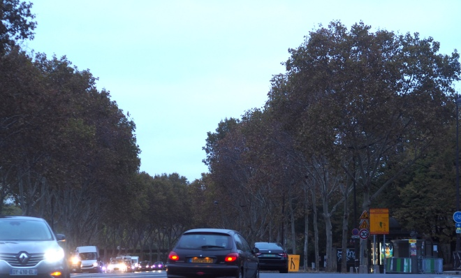 plane trees champ de mars Paris 1018.JPG
