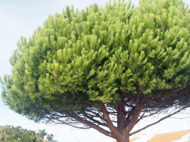 tree Chatel 1018.JPG