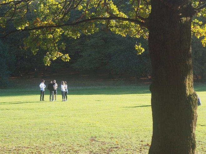 white oak tree Cherrytree park East Finchley 1018.JPG
