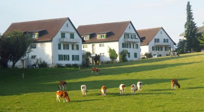cows field houses Switzerland train Basel-Milan 819.JPG